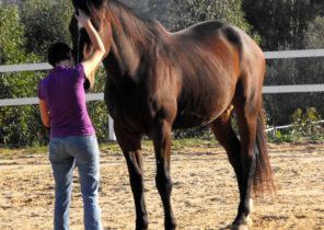 Die Sprache der Pferde – Basiskurs
